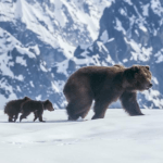 "5 Reasons to See Disney's ""Bears"" Movie with Kids"