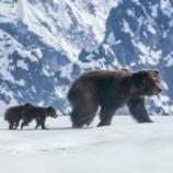 Disney Bears movie with kids