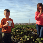 Stawberry picking with kids in Carlsbad just got more expensive!