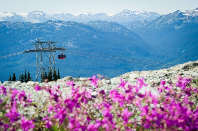 The Peak to Peak Gondola with Alpine wildflowers (Credit: Mike Crane)