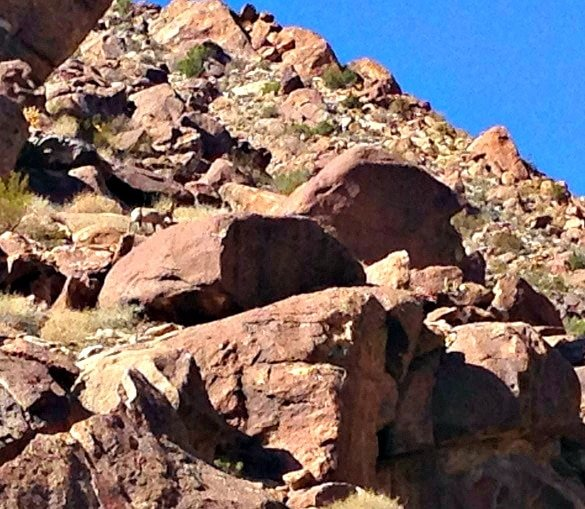 Can you spy with your little eye the bighorn sheep? (Photo credit: Colleen Lanin)