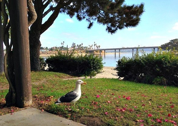 View of the Coronado Bridge from our bungalow (Photo credit: Colleen Lanin)