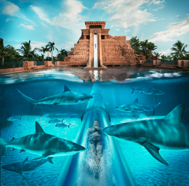 Zip through a shark-filled lagoon in a tunnel waterslide at the Atlantis Aquaventure Water Park