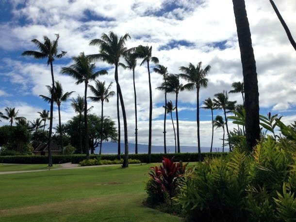 Palm trees galore at the Sheraton Maui