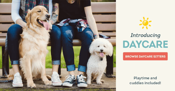 Your dog doesn't need to be lonely just because you have a job. Check out DogVacay Day Care.