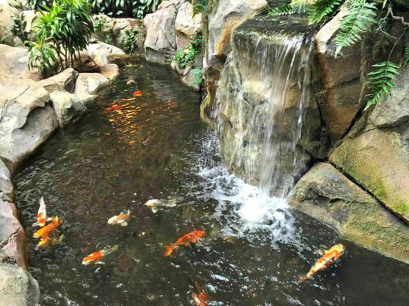Koi ponds and waterfalls make Embassy Suites more fun for families