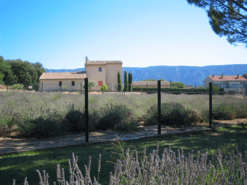 Museum of Lavender in the town of Coustellet in the Luberon - 10 Top Destinations in France for Families