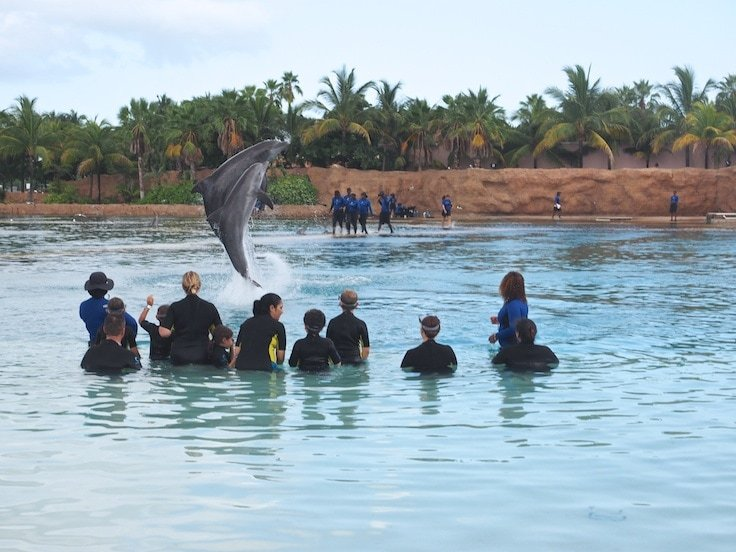 Top 20 Things to do at Atlantis Paradise Island Resort ~ Swim with the dolphins at Dolphin Cay, one of the largest and most sophisticated marine habitats in the world.