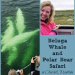 Spotting Beluga Whales & Polar Bears in Churchill, Manitoba