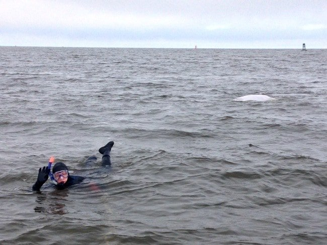 snorkelling in Hudson Bay