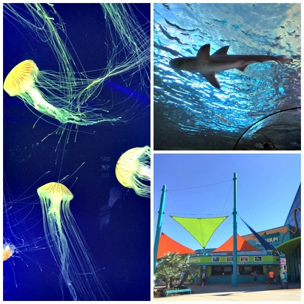 The popular Ripley's Aquarium at Broadway at the Beach ~ 8 Myrtle Beach Family Activities and Attractions You'll Love