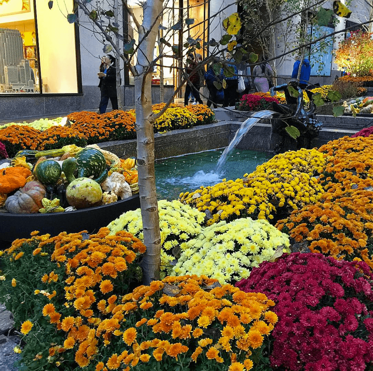 The Channel Gardens in fall at Rockefeller Center ~ New York City in One Day for First Timers