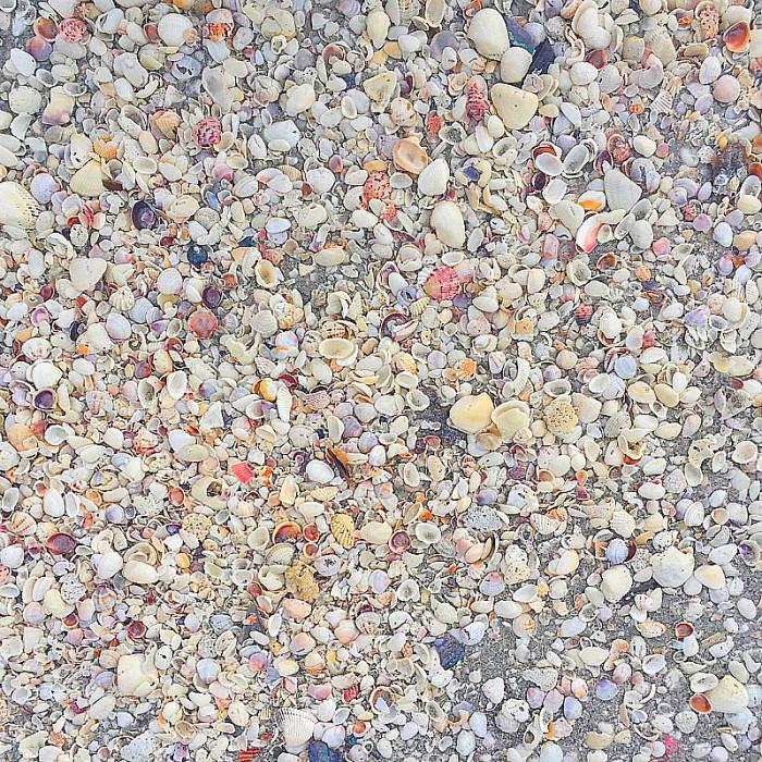Shells, shells everywhere on Sanibel Island after a rain storm ~ Fun Things to Do on Captiva Island and Sanibel Island When it Rains