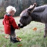 Why Book a Family Farm Stay Vacation
