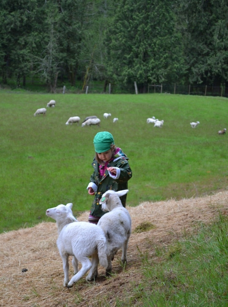 Leaping Lamb Farm guest Lily Bouchard playing with lambs during her farm stay vacation ~ How to Connect Kids with Nature on Family Vacation