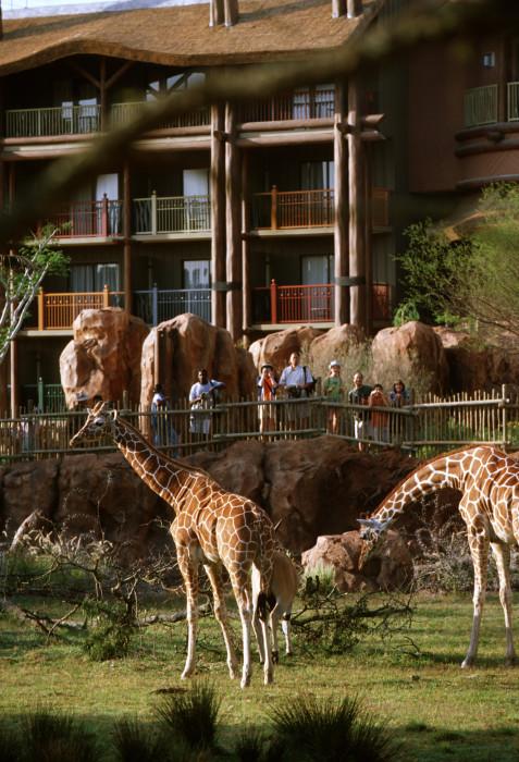 Disney's Animal Kingdom Lodge ~ How to Save Money on Disney Vacation