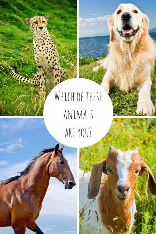 Which animal are you? Cheetah, golden retriever, racehorse or goat? Find out at TravelMamas.com!