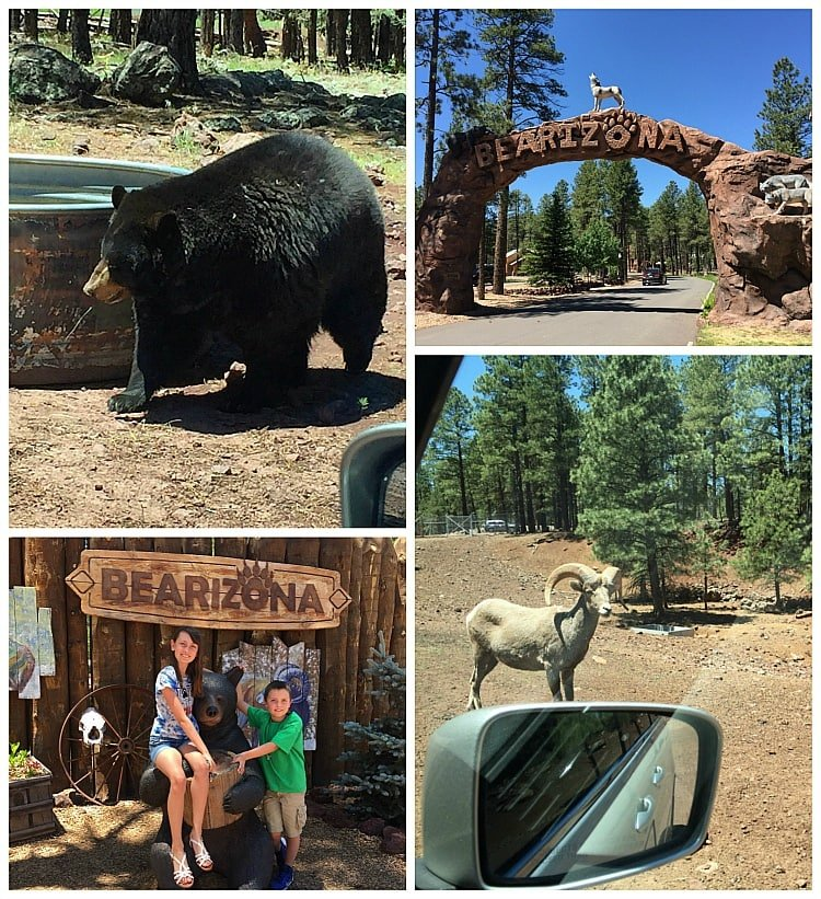 Bearizona drive-through wildlife park is a big hit with kids ~ Grand Canyon with Kids Side Trip