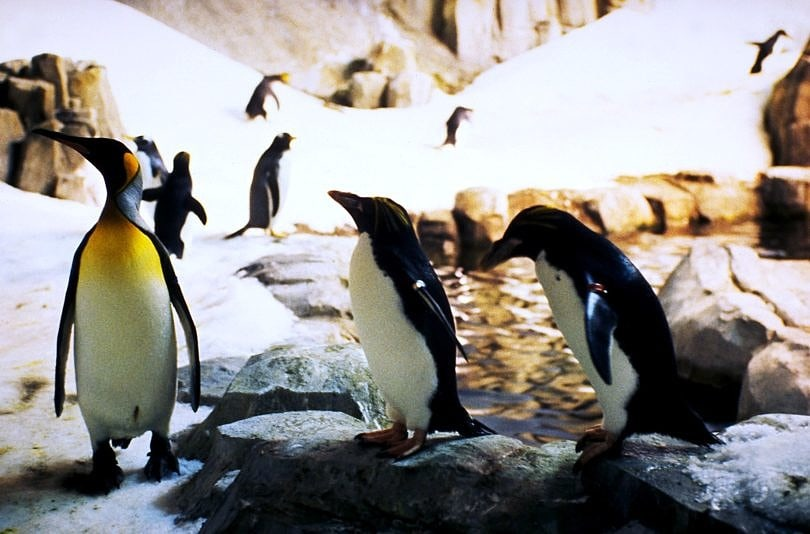 Penguins at the Montreal Biodome ~ Montreal with Kids