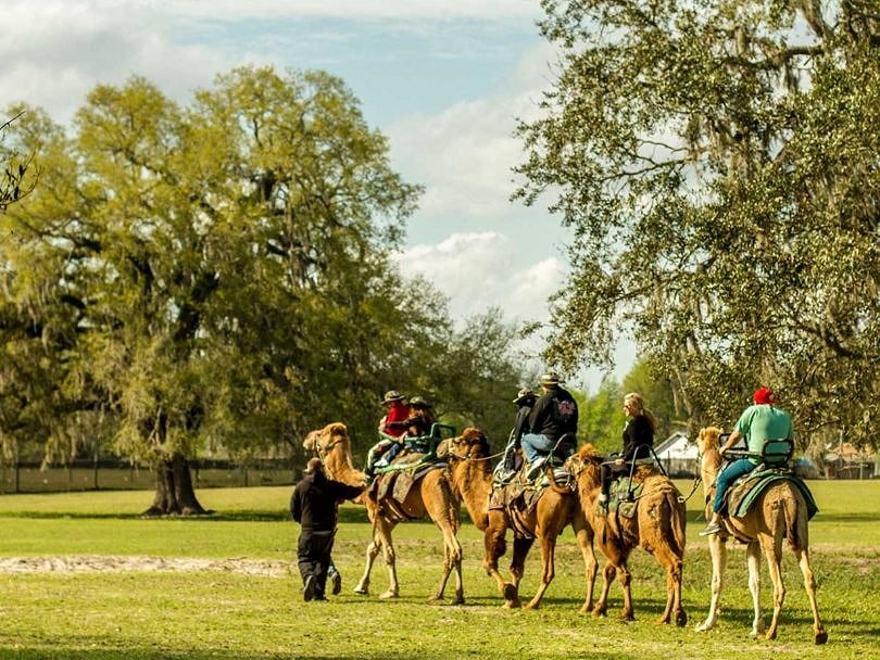 Camel Expedition with Safari Wilderness Ranch