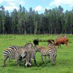 Safari Wilderness Ranch ~ An Unforgettable Animal Safari in Florida
