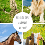 Which Animal Are You? A Fun Look at the Human Spirit