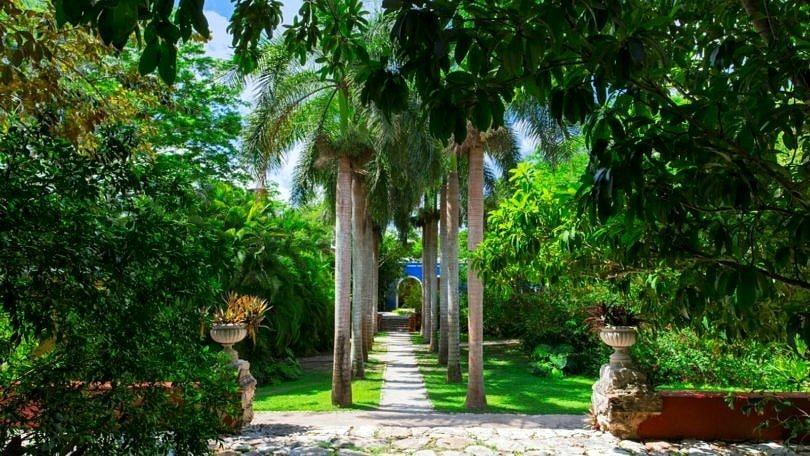 The gorgeous landscape at Hacienda San Jose ~ Yucatan Hacienda Hotels