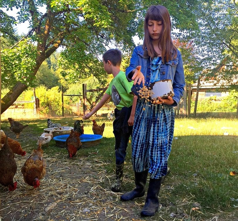 Feeding chickens and ducks at Leaping Lamb Farm in Alsea, Oregon