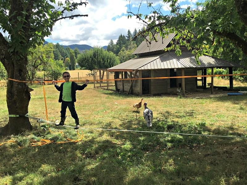 Finding balance at Leaping Lamb Farm