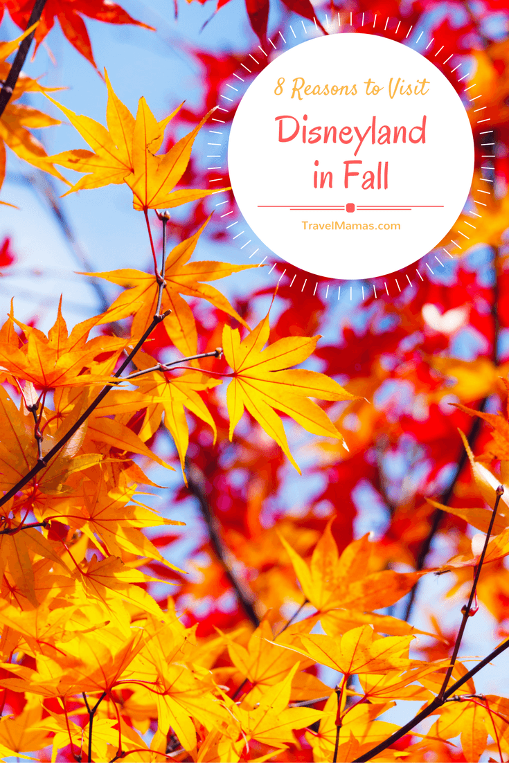 8 Reasons to Visit Disneyland in Fall
