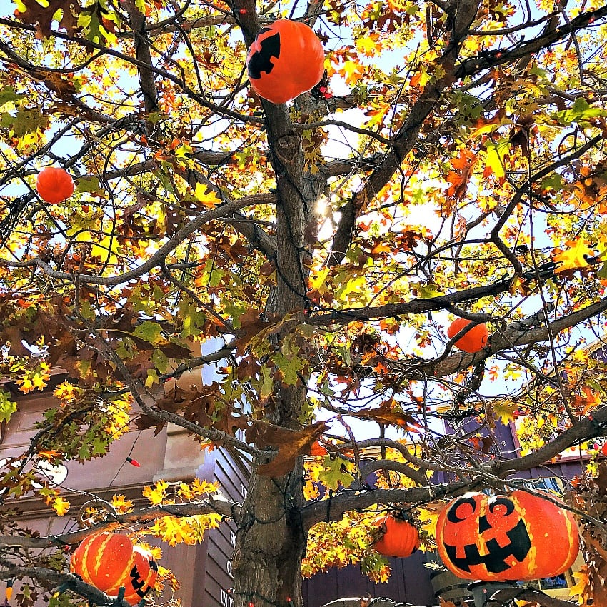 The Halloween Tree at Disneyland ~ 8 Reasons to Fall in Love with Disneyland in Fall