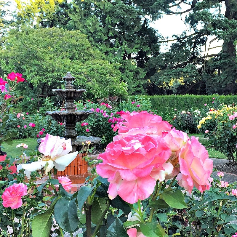 International Rose Test Garden ~ Portland with Kids
