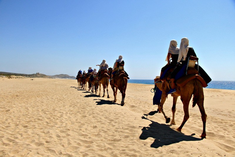 A camel ride on the beach is a unique Cabo adventure. (Photo credit: Cabo Adventures)
