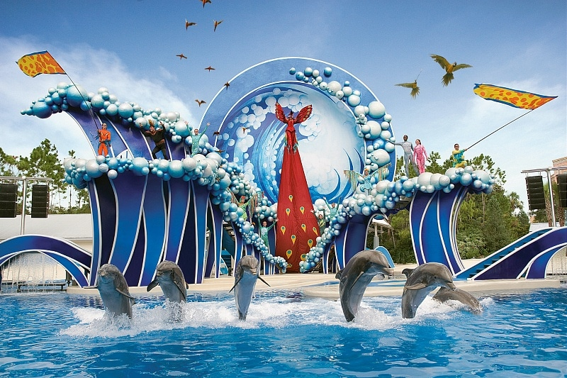 SeaWorld San Diego's Blue Horizons Show ~ 15 Best San Diego Attractions for Kids