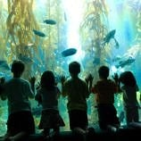 San Diego Attractions for Kids
