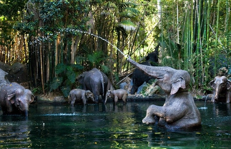 Jungle Cruise ~ Best Disneyland rides and attractions for babies and toddlers