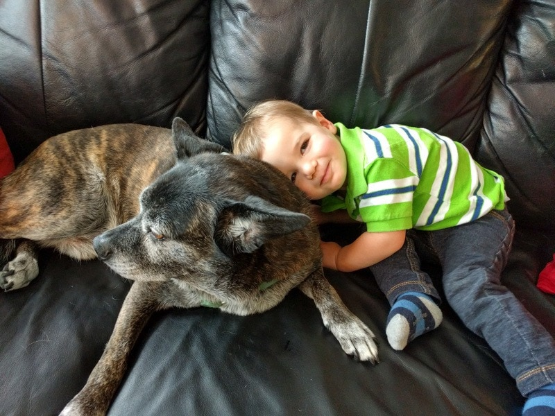 Pets are important members of our families ~ TrustedHousesitters Reivew