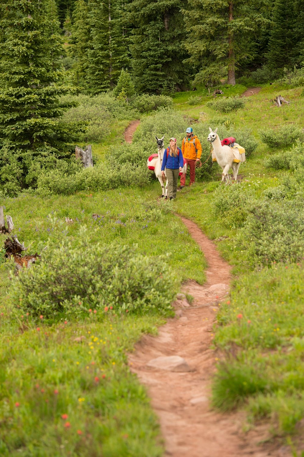 Hike with a llama in Vail, Colorado in summer