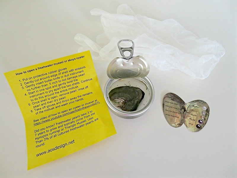 Find your own pearl oyster kit from AOS Design
