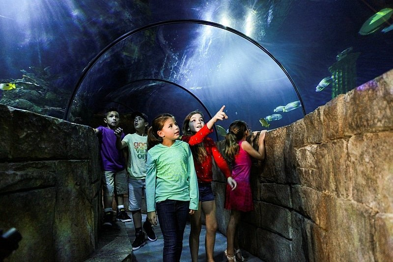 SEA LIFE Aquarium is fun AND educational ~ Legoland California Tips for All Ages from Babies to Adults