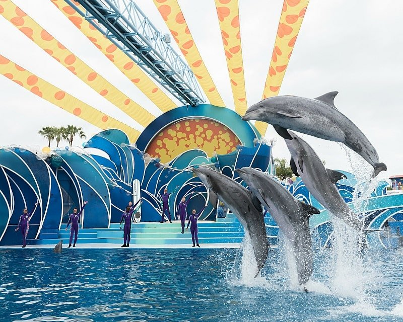 Dolphin Days will wow the whole family ~ 12 Tips for SeaWorld San Diego