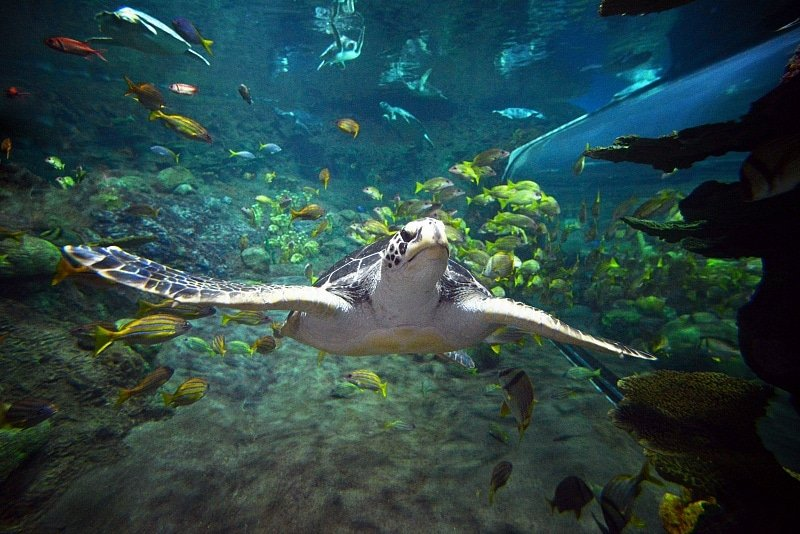 Sea Turtle Reef ~ 12 Tips for SeaWorld San Diego with Kids