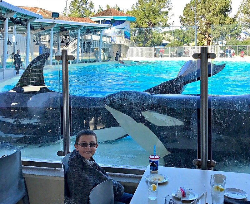 Dine with Orcas is a meal your family will always remember ~ 12 Tips for SeaWorld San Diego with Kids