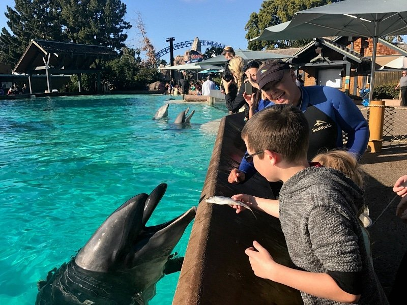Kids and adults get a chance to feed dolphins during a Dolphin Encounter ~ 12 Tips for SeaWorld San Diego with Kids