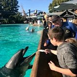 seaworld san diego with kids