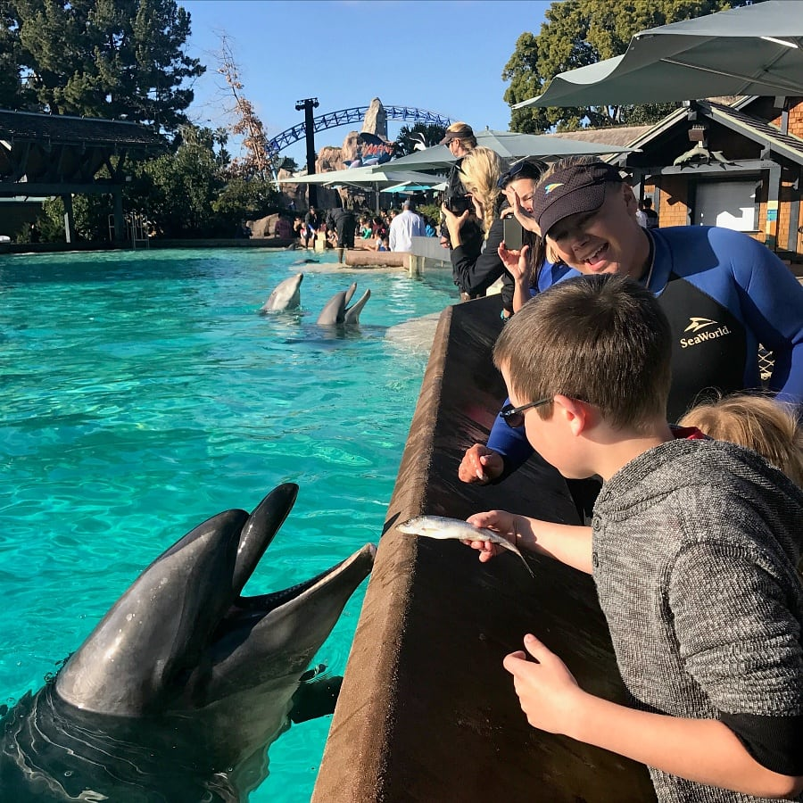 17a90d7346ba SeaWorld San Diego with Kids ~ 12 Tips to Make the Most of Your Visit