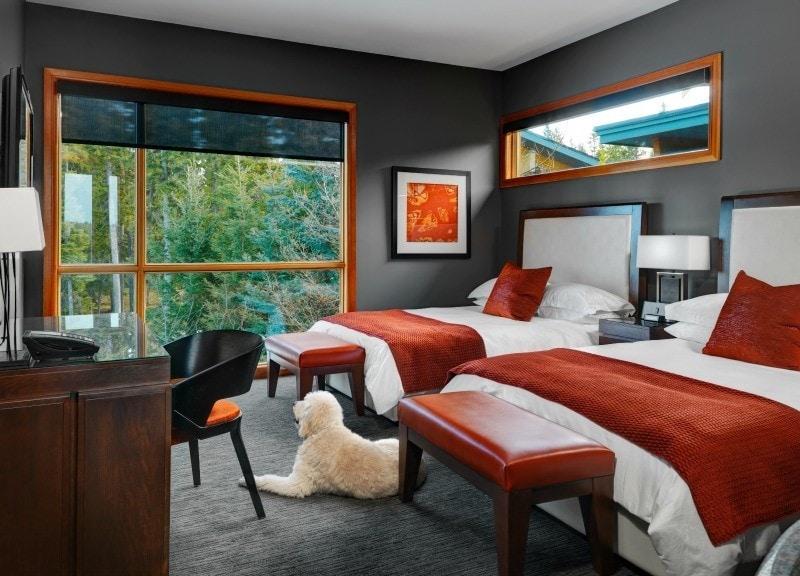 Azuridge Estate Hotel - Best Hotels for Pets