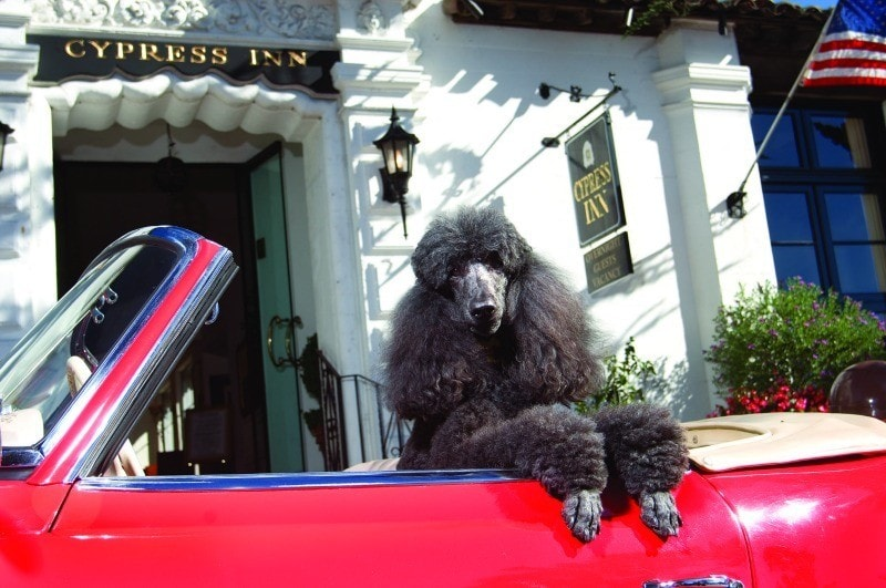 Cypress Inn ~ Best Hotels for Pets