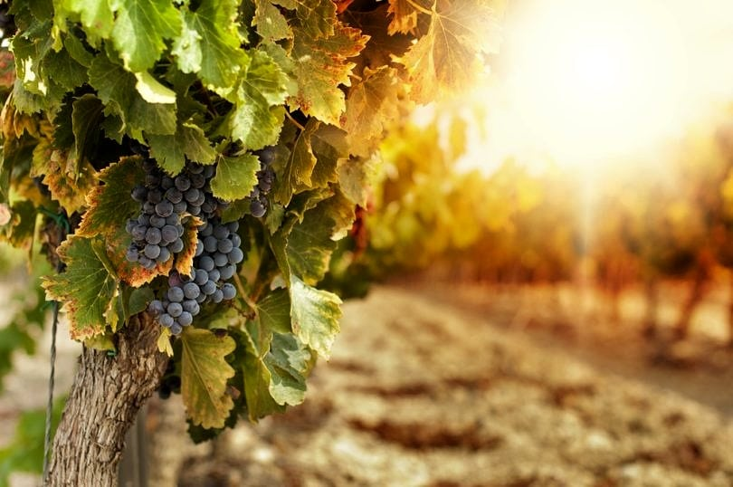 Sonoma County is paradise for wine lovers ~ Fun for Couples along the Wine Road