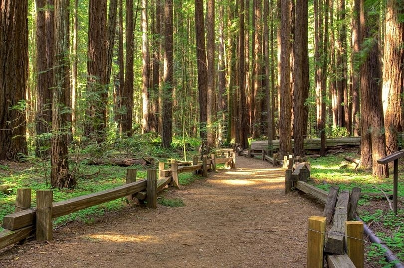Armstrong Redwood Park in Sonoma, California ~ Fun for Couples along the Wine Road in Sonoma County